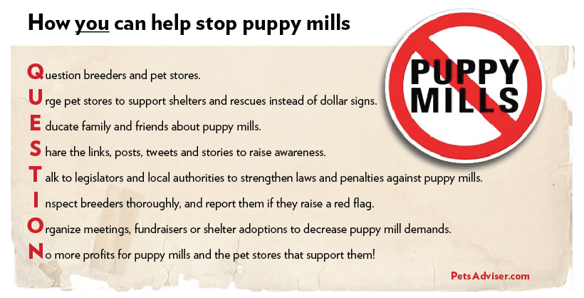 How YOU can help stop puppy mills